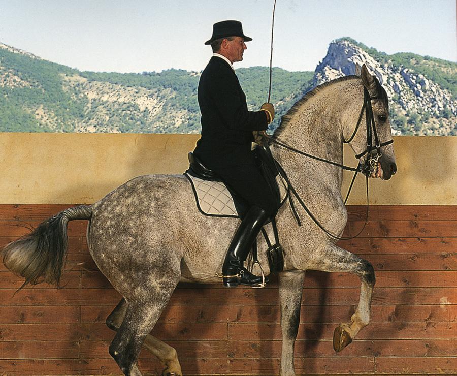 Las ayudas, la gimnasia, la danza y la ligereza en el caballo, según el adiestramiento de Philippe Karl