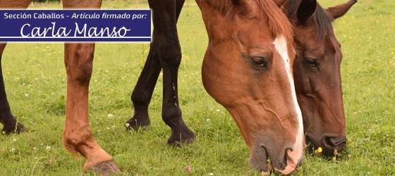 Alteraciones en los incisivos de los caballos IV por Carla Manso
