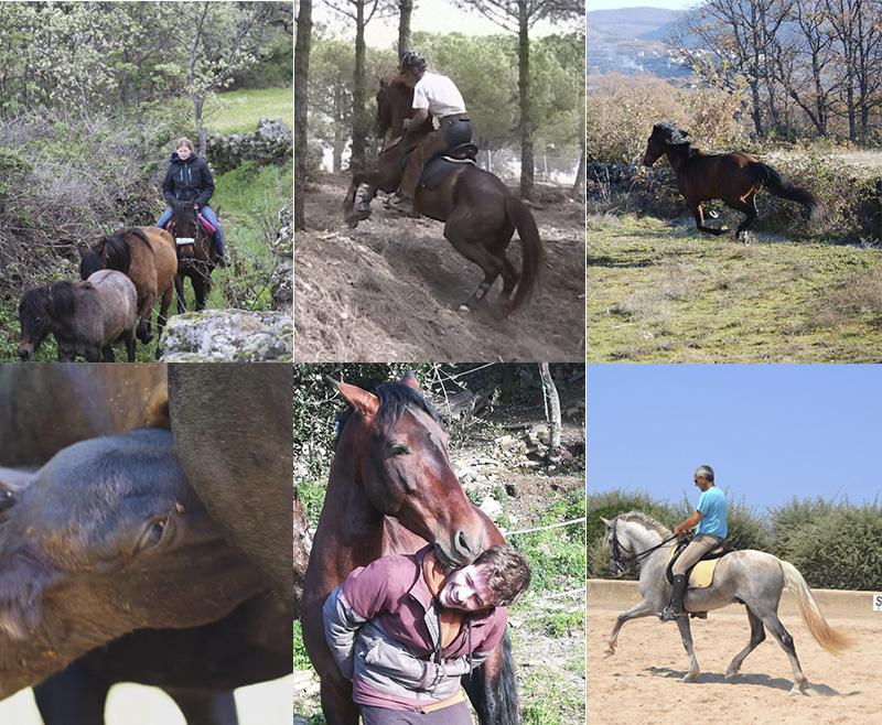 Las emociones en los caballos