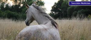 Nuevas gestiones de la RFHE a favor del mantenimiento de la salud de los caballos