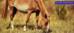 Lee más sobre el artículo Problemas en la reproducción y/o gestación de las yeguas