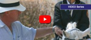 Lee más sobre el artículo Entrenamiento de caballos jóvenes por Víctor Álvarez