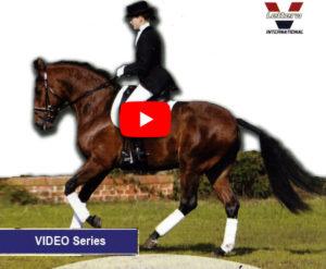 Lee más sobre el artículo El caballo Lusitano por Francisco Cancela