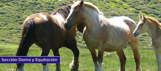 La emociones del caballo 2: las negativas