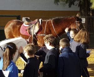 El caballo al cole, la única alternativa para aumentar la afición hípica en España