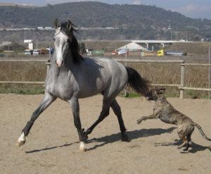 Las emociones del caballo 3: nuestro guion de cómo actuar