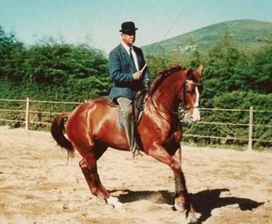 Cómo dar confianza y estimular al caballo