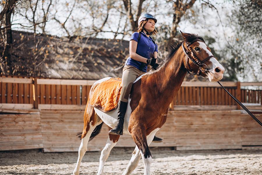 Curso Iniciación a la Equitación