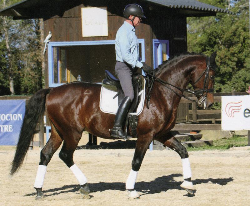 La impulsión básica para que el caballo coja contacto con el filete