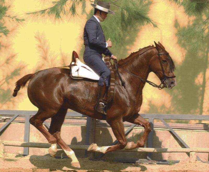 Arrear, templar y doblar: el ejercicio vaquero más aplaudido