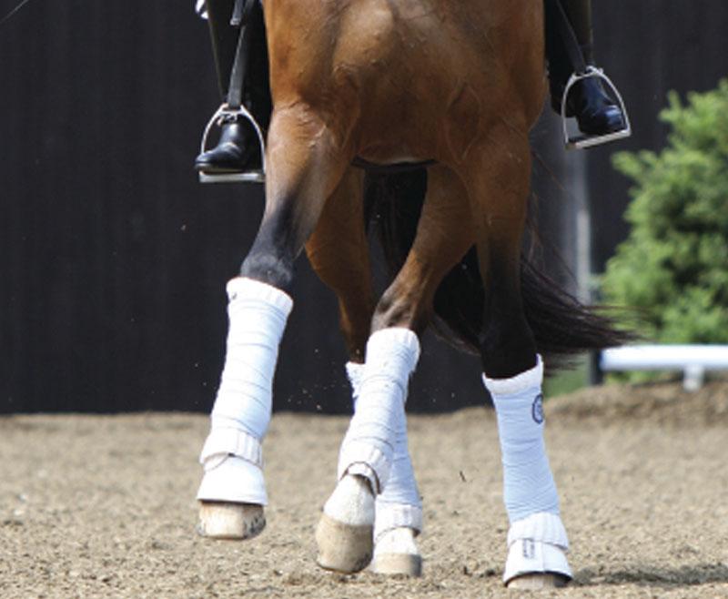 Apoyos: consejos y problemas frecuentes al enseñar al caballo joven