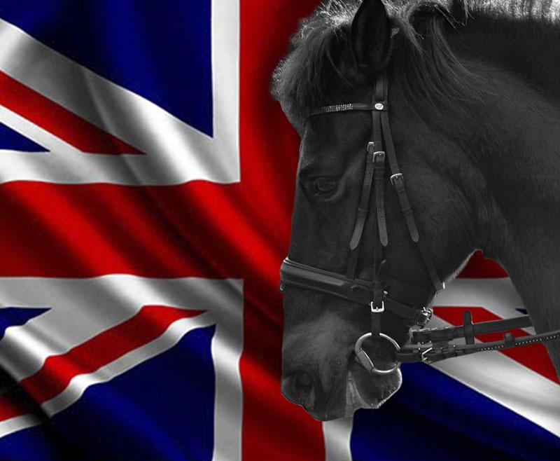 ¿Cómo afectará el Brexit a las exportaciones de caballos al Reino Unido?