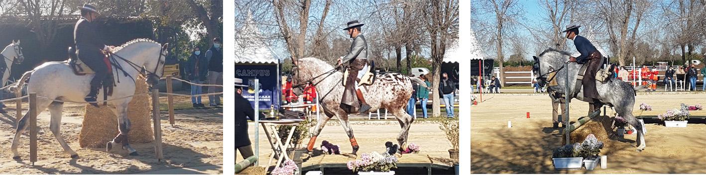 Campeonato equitación de trabajo