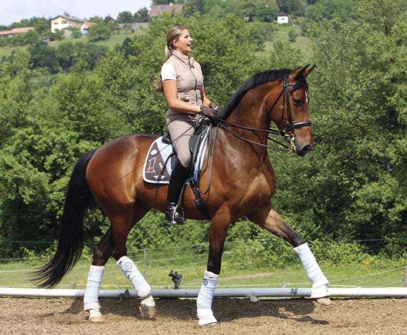 ¿Quieres conseguir una buena flexibilidad en tu caballo?