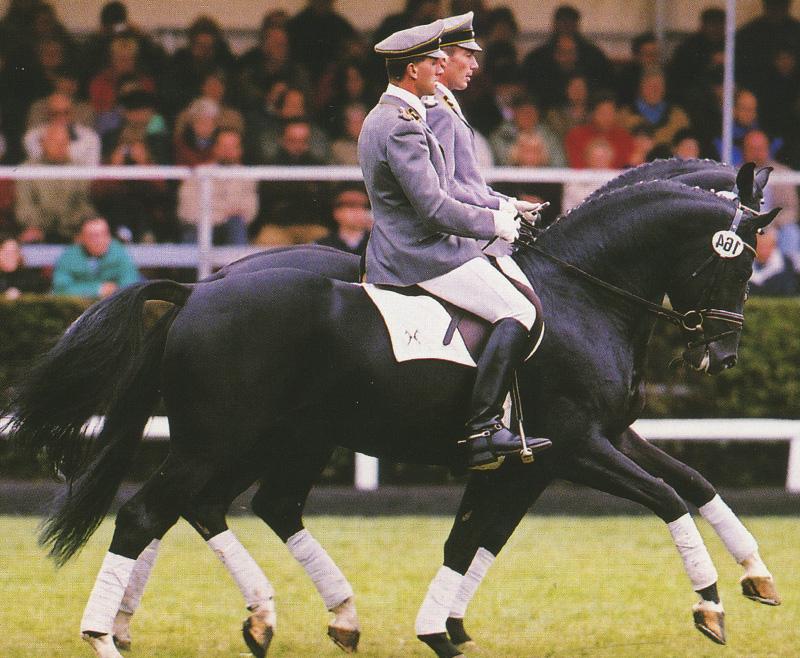 ¿Quiénes son los responsables de la actual situación de la equitación?