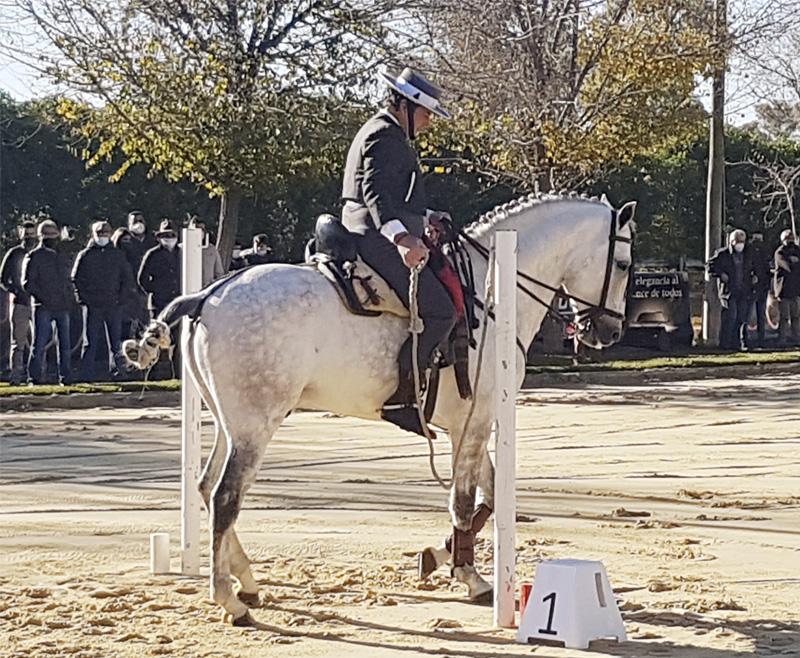 José Antonio Olea se hace con dos oros en el III Cto. de Andalucía de Equitación de Trabajo