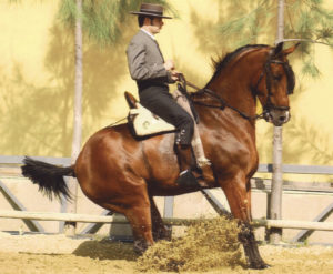 ¿Existe el caballo ideal para arrear y parar a raya?