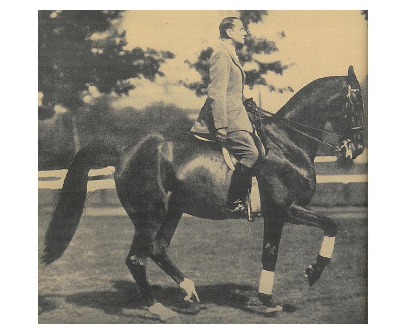 Lee más sobre el artículo ¿Qué significa la equitación según los principios clásicos?