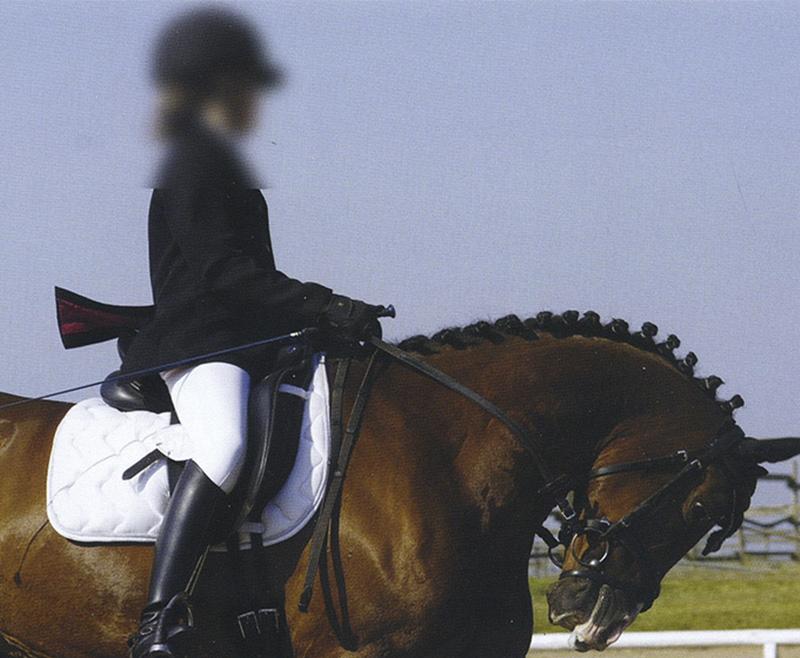 ¿Debe el caballo bajar la cabeza?