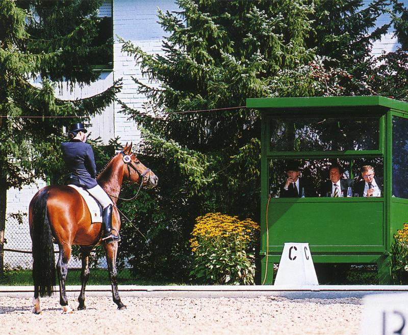 Lee más sobre el artículo ¿Quiénes son los responsables de la actual situación de la equitación? 2ª parte
