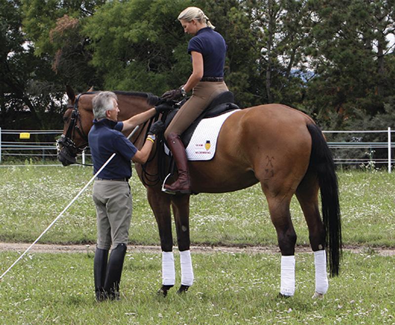 Lee más sobre el artículo Los 34 términos más importantes en la equitación