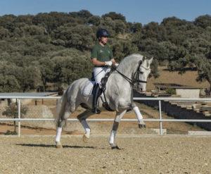 ¿Qué aporta el entrenamiento de fuerza a la equitación?