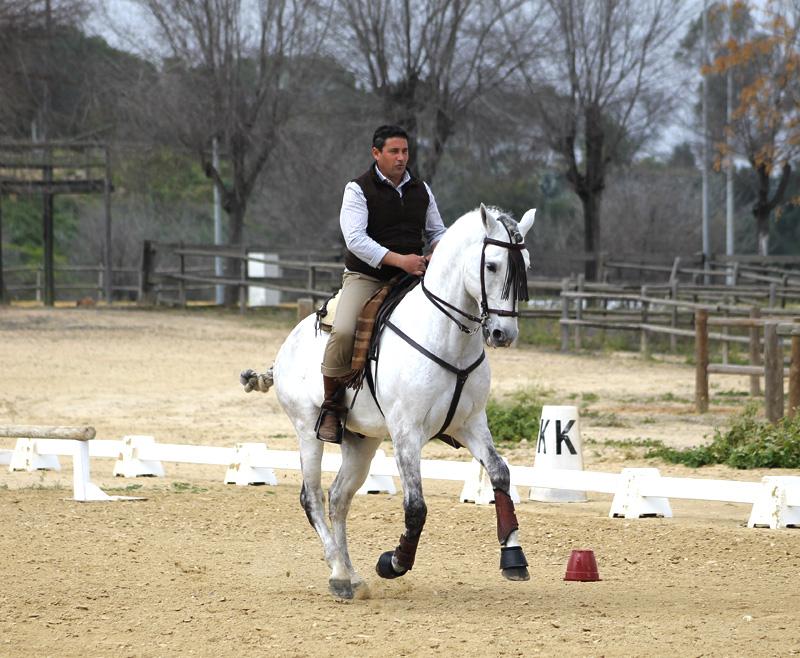 La disciplina hípica española más divertida