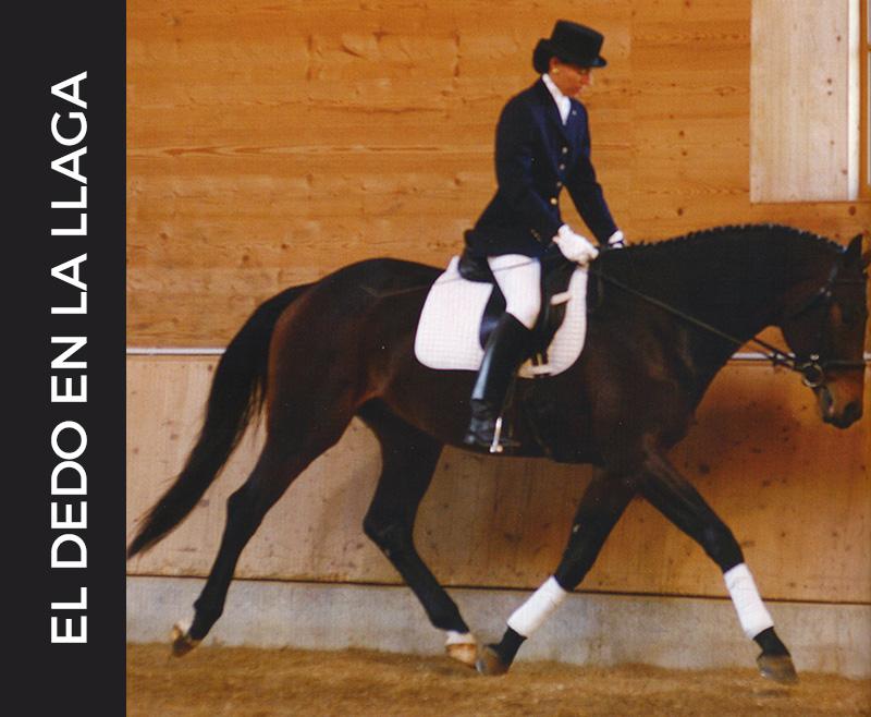 Lee más sobre el artículo ¿Por qué la hiperflexión hace que el caballo esté incómodo e infeliz?