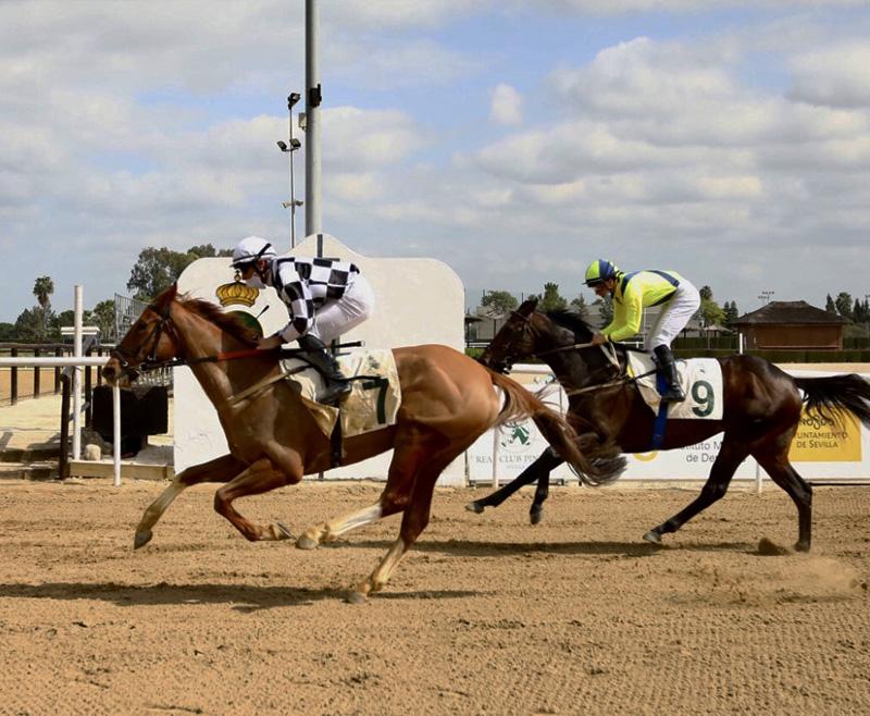 Carreras de caballos en Pineda el día de Andalucía: todo lo que debes saber sobre la jornada