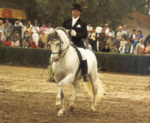 ¿Cómo dosificar las virtudes de tu caballo?