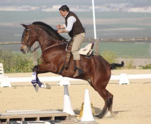 Lee más sobre el artículo Equitación de Trabajo en España. Presentación en casa de José Léon