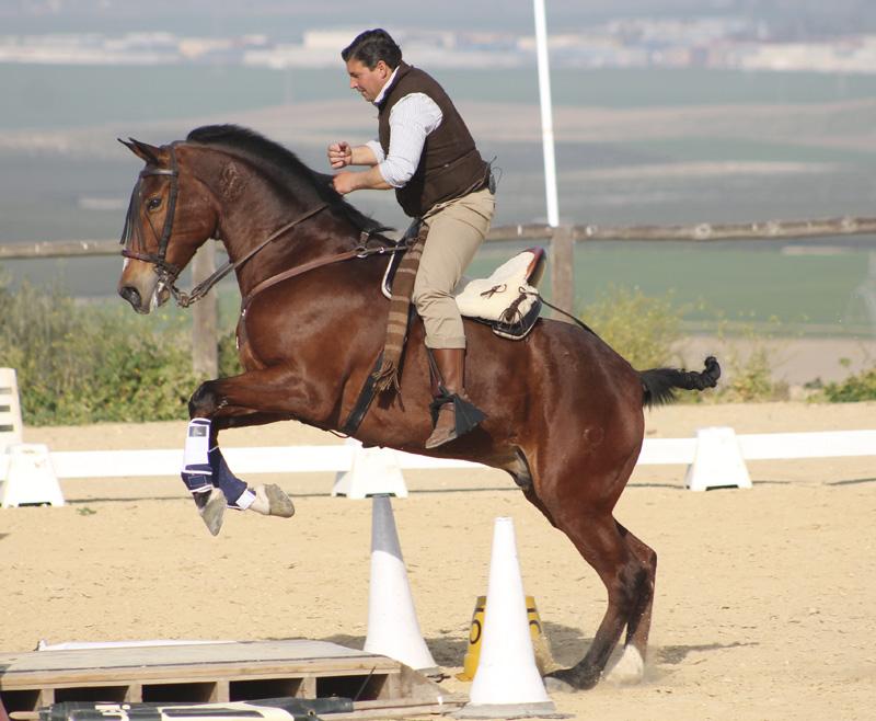 Equitación de Trabajo en España. Presentación en casa de José Léon