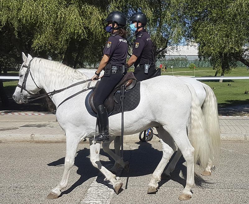 ¿Cuál es la legislación para circular a caballo por tu localidad?