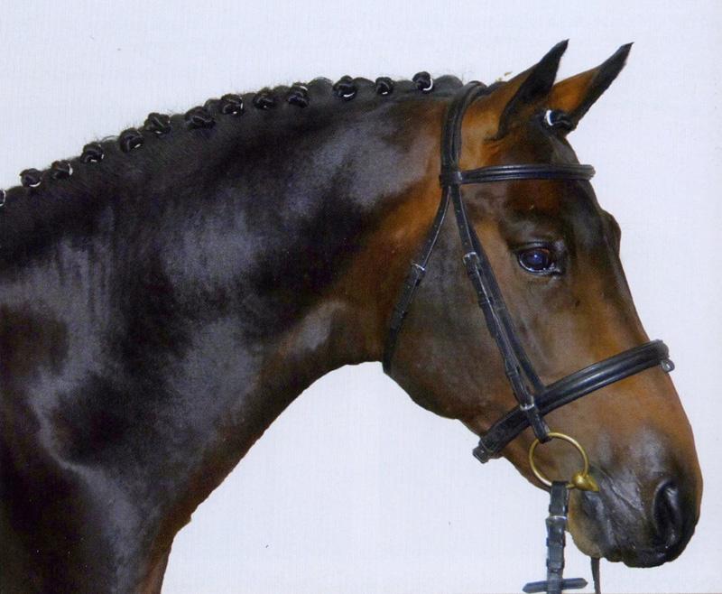 ¿Cuáles son las ventajas del jinete que sabe usar el cuello de su caballo?