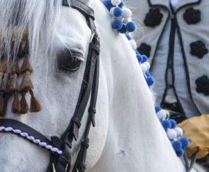 Lee más sobre el artículo La REAAE celebra la Feria del Caballo con un espectáculo conmemorativo