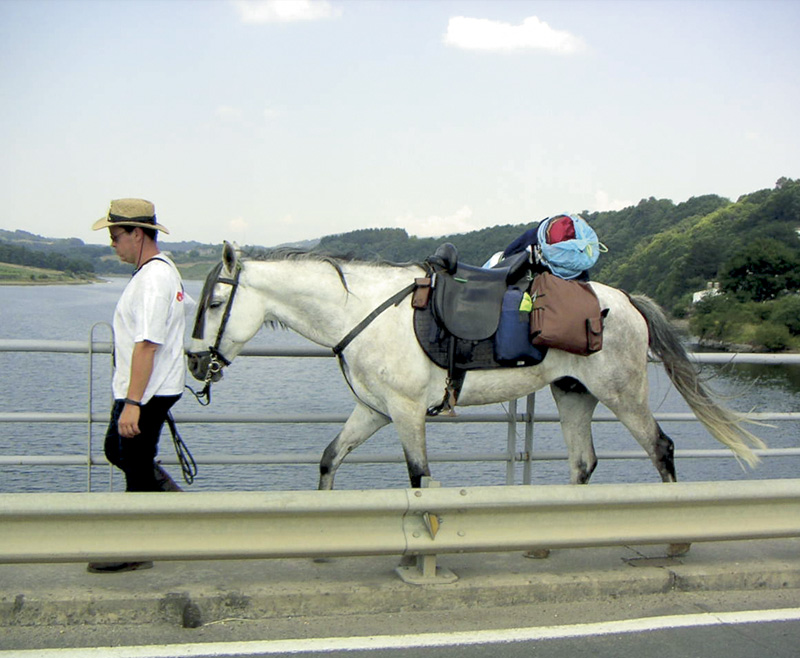 Lee más sobre el artículo ¿Qué necesitamos para viajar con nuestro caballo? Viajar a caballo es posible