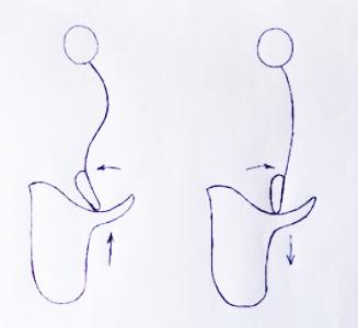Dibujo pelvis y columna