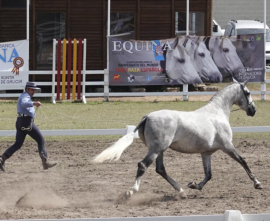 Lee más sobre el artículo Equina Galicia '21 reunirá a los mejores caballos en cinco competiciones