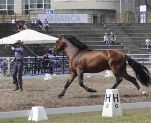 Lee más sobre el artículo El día 31 todos a Equina Galicia, donde el caballo es el rey