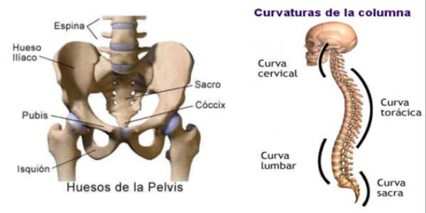 Pelvis y columna