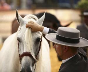 Lee más sobre el artículo ANDUCAB '21 contará con la participación de 43 ganaderías