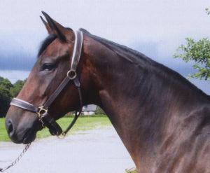 Lee más sobre el artículo La importancia del eje cabeza-cuello con el tronco del caballo