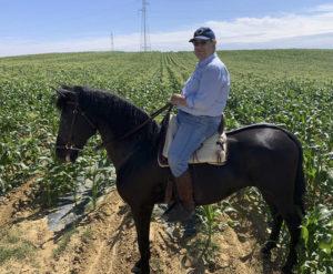 Lee más sobre el artículo El caballo y el aceite, si son del mejor nivel, son rentables